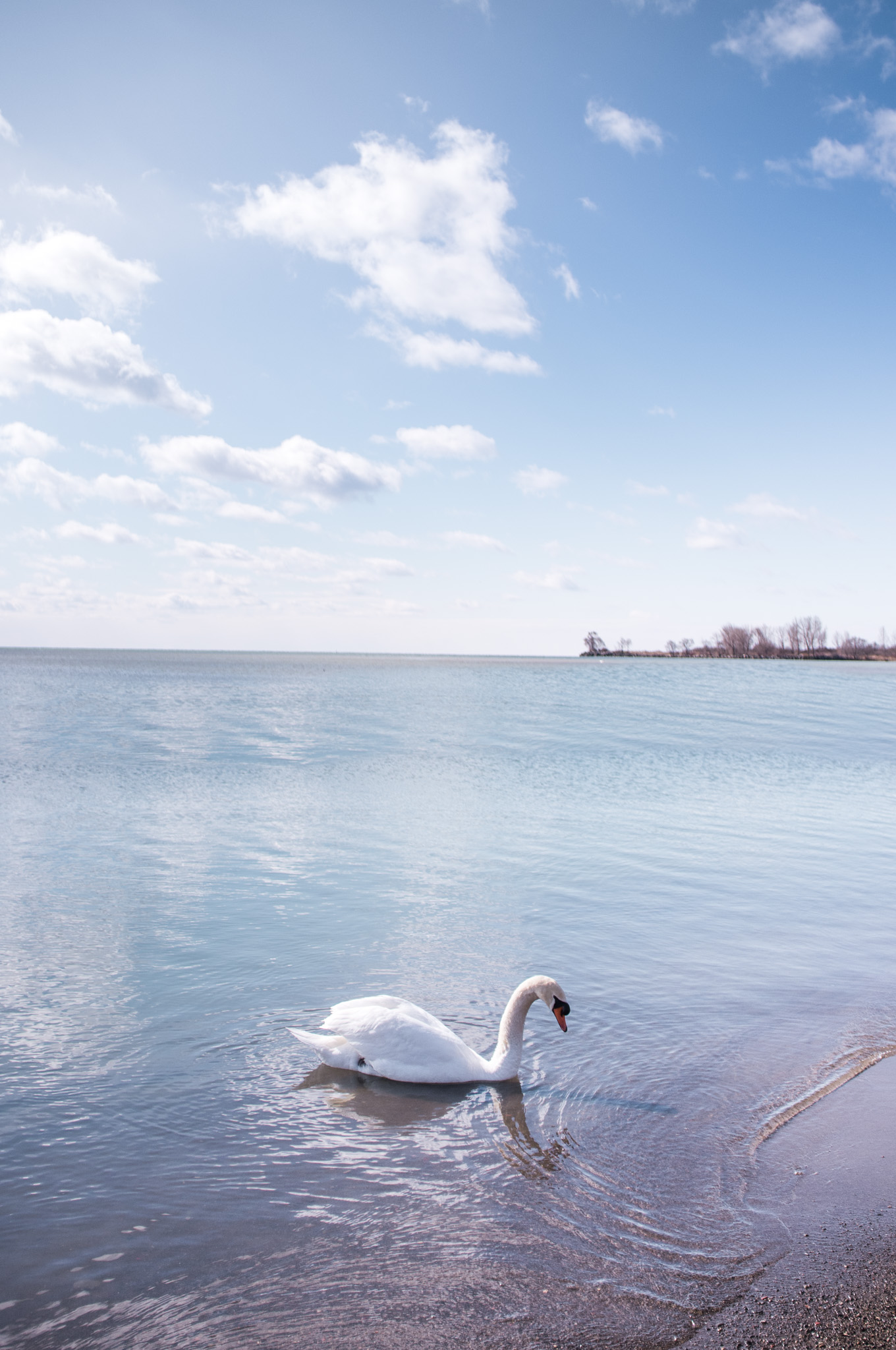 Where My Eyes Go | Windsor Ontario Photographer | Lakeside Park Toronto