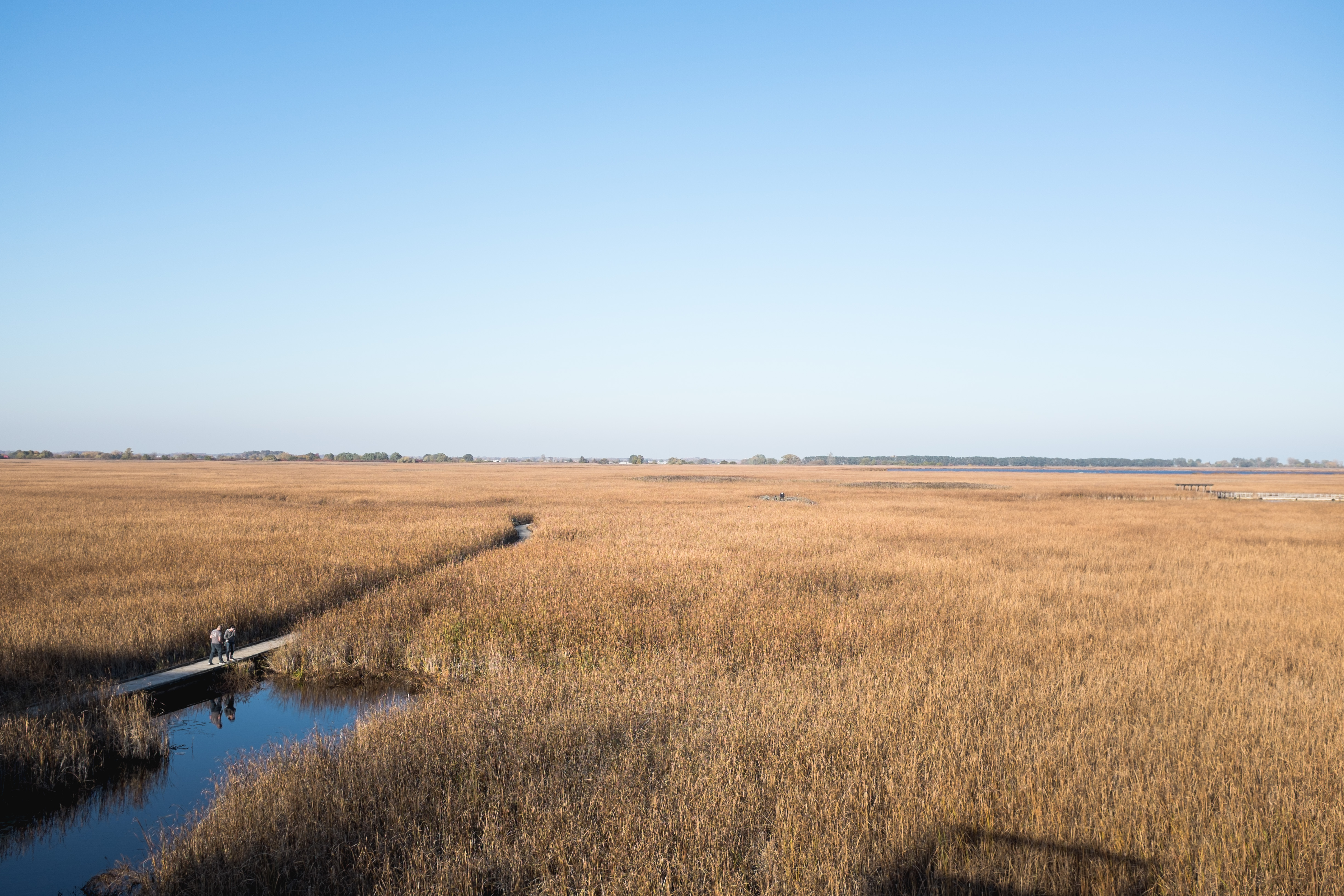Where My Eyes Go | Point Pelee National Park